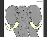 Desenho Elefante africano pintado por rafa99