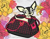 Desenho Chihuahua de viagem pintado por Lauana_zan