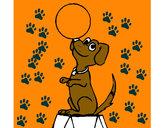 Desenho Cão de circo pintado por lucasjose