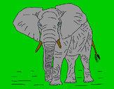 Desenho Elefante 1 pintado por luzinda