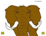 Desenho Elefante africano pintado por Rafael_014