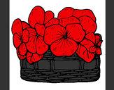Desenho Cesta de flores 12 pintado por Bhunna