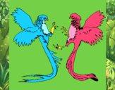 Aves com caudas grandes
