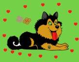 Husky cachorro
