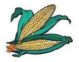 Espiga de milho