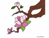 Flor de amendoeira