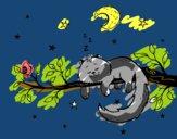 O gato ea luna
