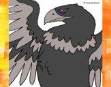 Desenho Águia Imperial Romana pintado por luzinda