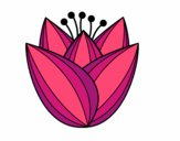 Flor de túlipa