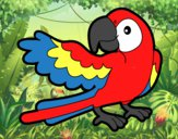 Papagaio abrir a asa