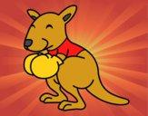 Boxe canguru