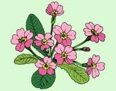Desenho Primula pintado por AmaliaLait