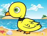 Pato de rio