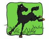 Cavalo a dar um coice