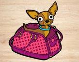 Desenho Chihuahua de viagem pintado por Missim