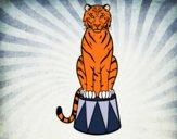 Desenho Tigre do circo pintado por sorte