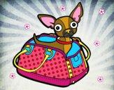 Desenho Chihuahua de viagem pintado por carolinamt