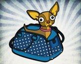 Chihuahua de viagem