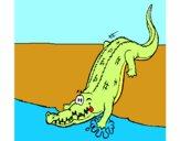 Crocodilo a entrar na água
