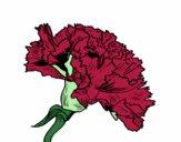 Flor de cravo