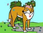 Desenho Lobo pintado por vitoriz