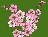 Desenho Flor de cerejeira pintado por marilurdes
