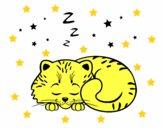 Gatito dormindo