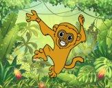 Macaco-prego bebê