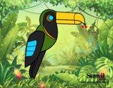 Pássaro Tucano
