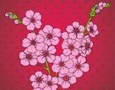 Desenho Flor de cerejeira pintado por Cello
