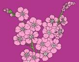Desenho Flor de cerejeira pintado por shirloka