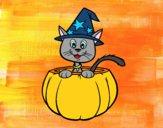 Gato do Halloween