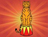 Desenho Tigre do circo pintado por Margarida-