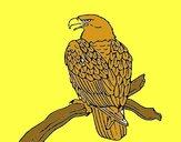 Águia num ramo