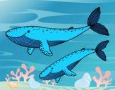 Desenho Baleias pintado por b10f10