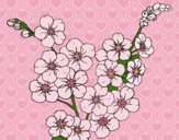 Desenho Flor de cerejeira pintado por Fheds