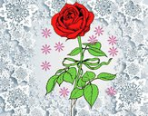 Uma rosa