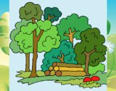 Desenho Bosque pintado por Sil