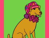 Cão palhaço