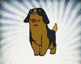 Cão São bernardo jovem
