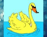 Cisne na água