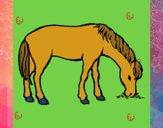 Cavalo a comer