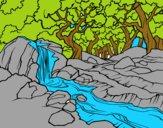 Paisagem da floresta com um rio