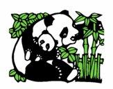 Mamã panda