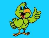 Papagaio feliz