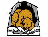 Urso a hibernar