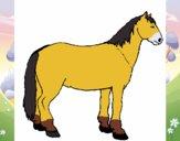 Cavalo tranquilo
