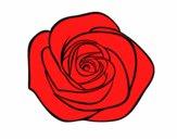 Desenho Flor de rosa pintado por Kirinha