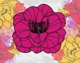 Papoula flor