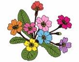 Desenho Primula pintado por Kirinha